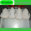 Best quality frozen whole halal chicken