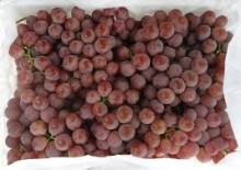 Fresh red globe grapes for sale
