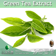 25%50%80% Catechins Green Tea Extract,Green Tea Extract Catechins Powder,Catechins Extract Powder