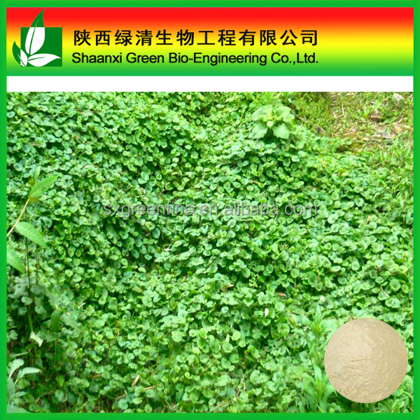 Gotu Kola Extract/Hot Sales Gotu Kola Extract Triterpenes 10%-80%/ High Quality Asiaticoside/Gotu Kola P.e