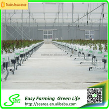 High quality agricultural greenhouse project for plants