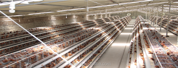 factory supply high quality 3-tier A-type layer chicken cage