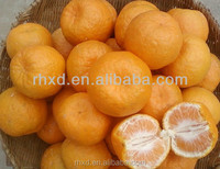 2016 juicy fresh Navel orange/quince fruits for sale