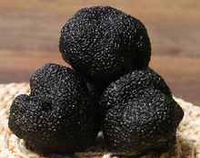High quality wild black truffle