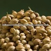 100% Pure & Natural Coriander Seed Oil GMP / ISO