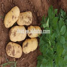Price Holland Chip Sweet Potato Seed