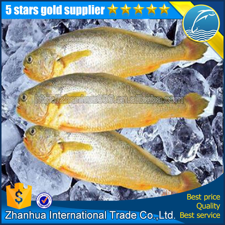 Whole round yellow croaker fish price, 200-300 300-400 400-500 500-600g frozen yellow croaker for market sale