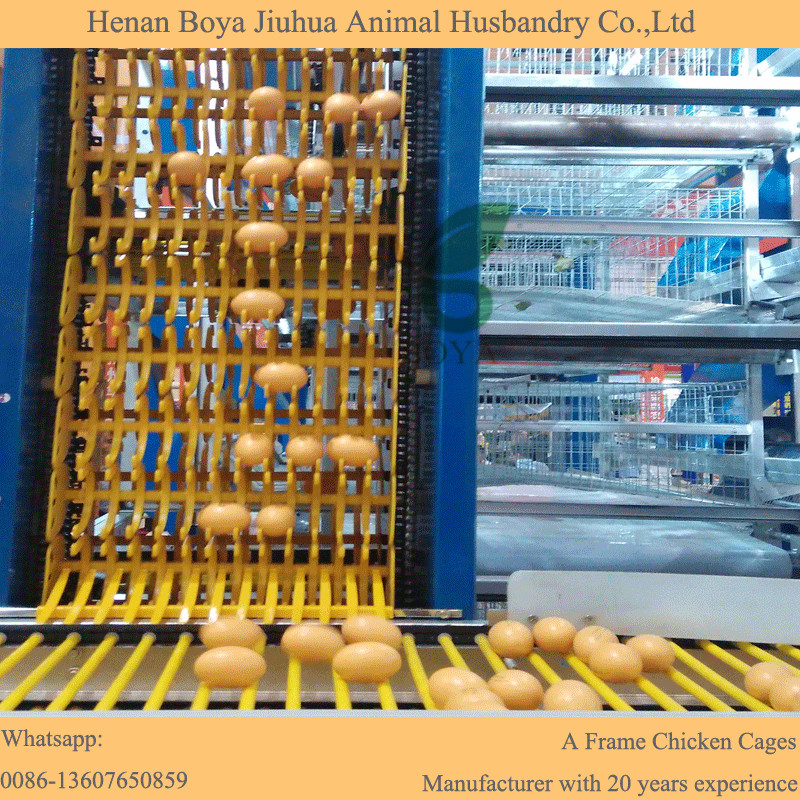Automatic chicken layer cages for farm chicken eggs