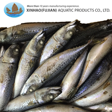 Superior quality frozen pacific fish sea horse mackerel for marketing sales