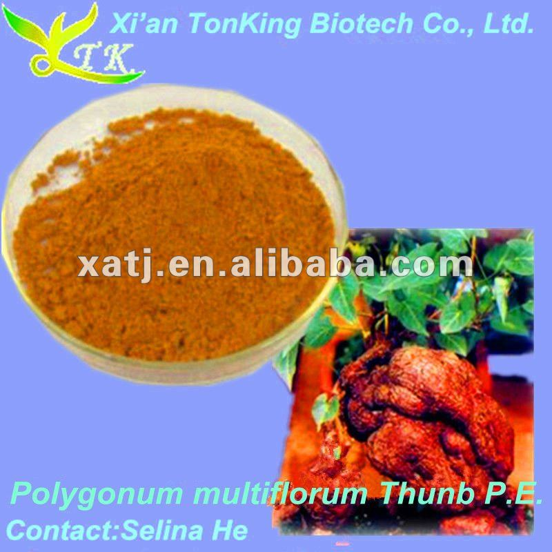 Polygonum multiflorum thunb extract 10:1