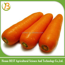 carrot export from China to India