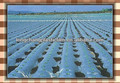 agricultural poly film for mulching