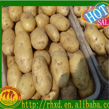 2016Chinese Fresh potatoes/factory price for potatoes India Pakistan Southeast Asia Europe UAE