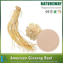 American panax ginseng root extract 80% ginsenoside ginseng root powder