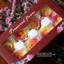 Natural Fresh Preserved Roses Tm Revolution From China Flower Factory For Celebration