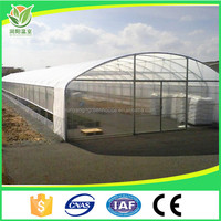 Prefabricated Low Cost Plastic 200 micron Film Tunnel Agriculture Mushroom Greenhouse with Gutter Used for Sale