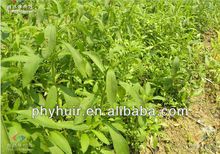 supply stevia rebaudiana extract,stevia rebaudiana extract 98%,stevia rebaudiana
