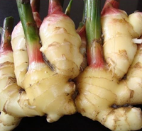 Fresh Ginger 100g-150g-200g-250g Shandong China PVC/mesh bag/carton hot sale GINGER