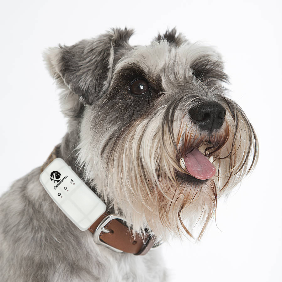 belt GPS Tracker Dog collar small gps animal tracker/cat tracking system gps gsm