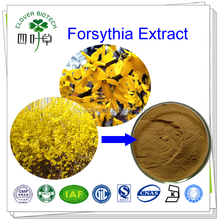 10:1hot sale Natural Fructus Forsythiae Extract