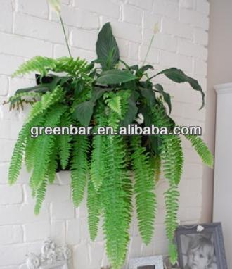 vertical plant holders/planters in EU standard/ single packing with OEM LOGO