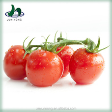 From China tomato sauce raw material