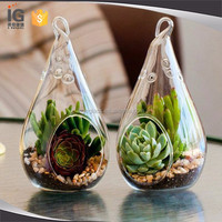 Hanging Rope Terrarium with Air Plant Kit for Sale