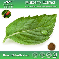 Hot Sale White Mulberry Leaf Extract Powder 10:1 20:1
