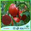 GMP Supplier Best Price Tomato Extract 5% Lycopene