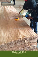 high grade raw wood veneer,bintangor veneer,plb veneer factory from linyi