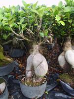 Temperate plants garden plants trees