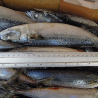 Taiwan Sea Frozen Blue Mackerel 30