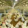 Full Set Breeder Breeding Equipment for Poultry House