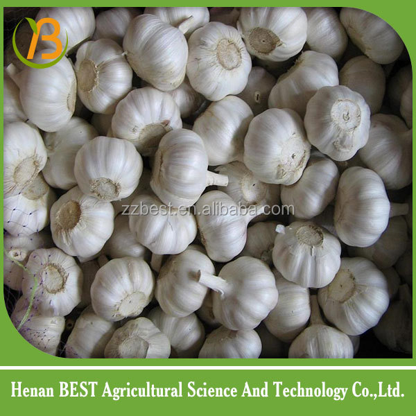 Gold suppliers for garlic price/fresh natural garlic from China with good quality/Fresh garlic for sale