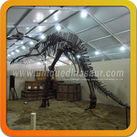 Skeleton 3D Dinosaur Model Dinosaur Frame