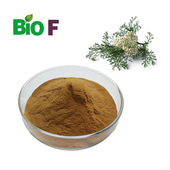 Herbal plant Achillea millefolium Extract powder