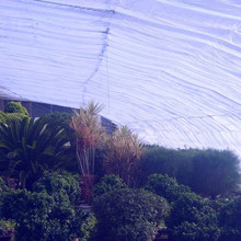 Modern transparent plastic greenhouse film for flower and vegetable