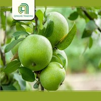 Wholesale sweet apples market green apples with high quality