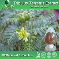 High Quality Tribulus Terrestris Extract Powder 60 Saponins