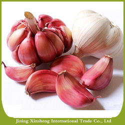 China factory fresh purple garlic for sale