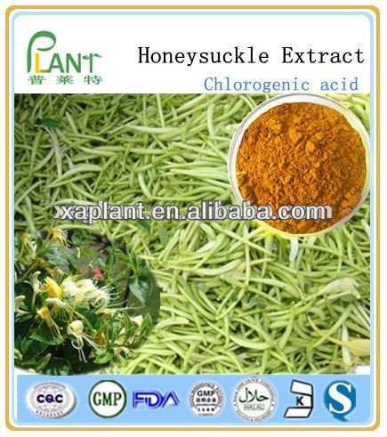 High quality honeysuckle extract 98% chlorogenic acid