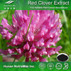 Natural Herbal Supplement Red Clover Extract Trifolium Pratense Extract