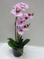 Hotel Decorative Artificial Orchid Flower Artificial Butterfly Orchid