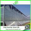 Venlo Glass Cover Metal Frame Greenhouse