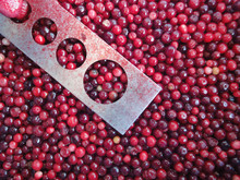 Frozen Fresh Lingonberries for Fruit Juice and Jam from sunnywell