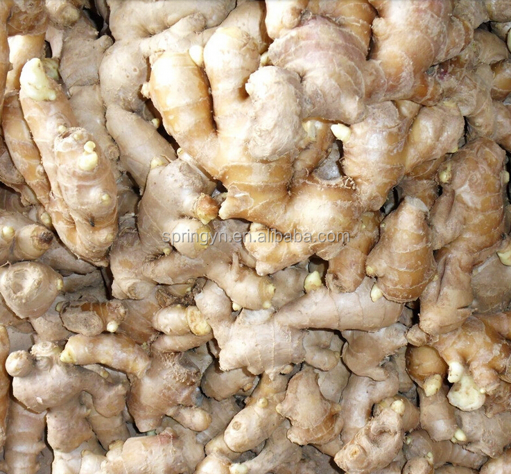 Fresh ginger Chinese fresh mature ginger specification
