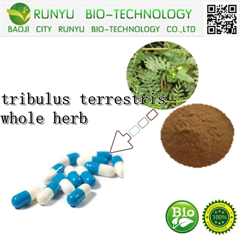 High Quality Tribulus Terrestris Herbs Extract Powder