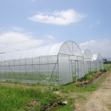 Multi-Span Agricultural Greenhouses Type and Large Size commercial hydroponic systems