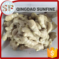 Chinese fresh ginger seeds for sale