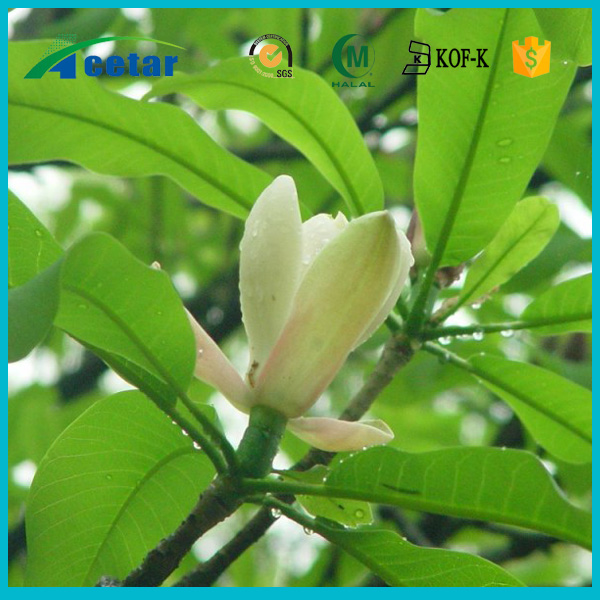hot sales black cohosh extract powder extract health benefits on sales
